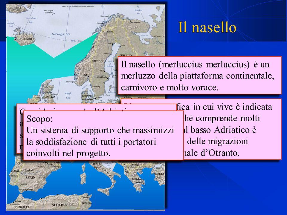Il nasello (merluccius merluccius) è un merluzzo della piattaforma continentale, carnivoro e molto vorace.