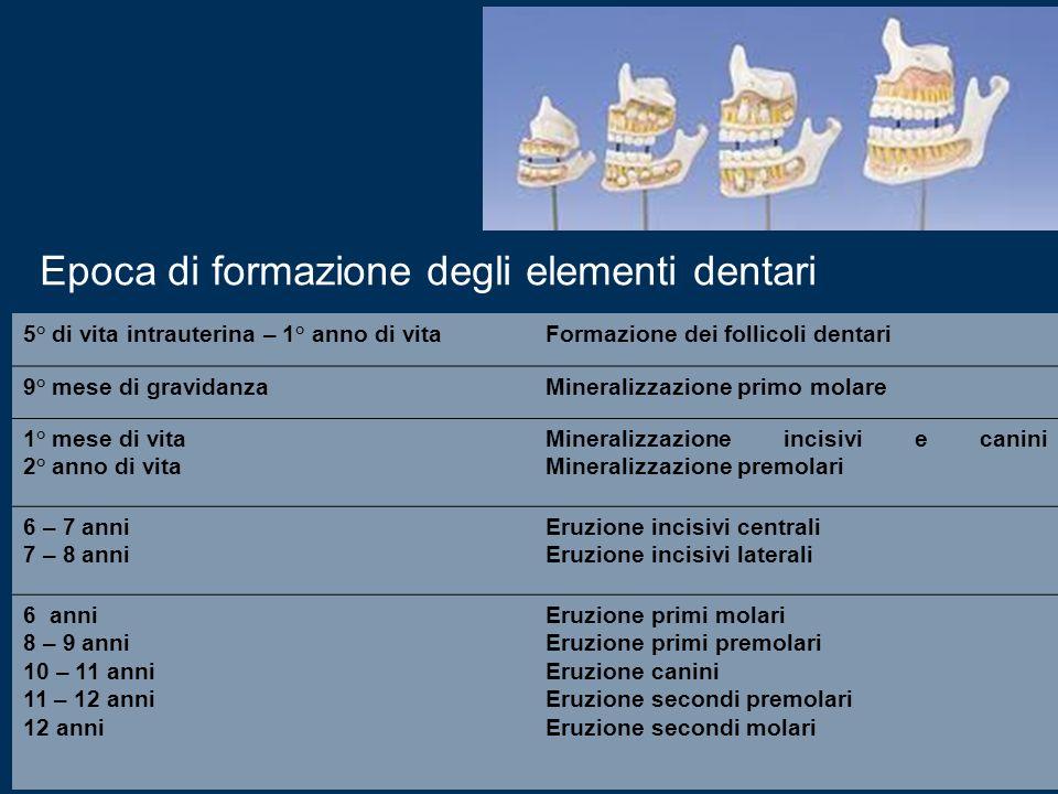 5° di vita intrauterina – 1° anno di vitaFormazione dei follicoli dentari 9° mese di gravidanzaMineralizzazione primo molare 1° mese di vita 2° anno d