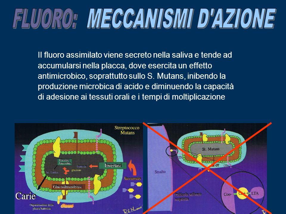 Il fluoro assimilato viene secreto nella saliva e tende ad accumularsi nella placca, dove esercita un effetto antimicrobico, soprattutto sullo S. Muta