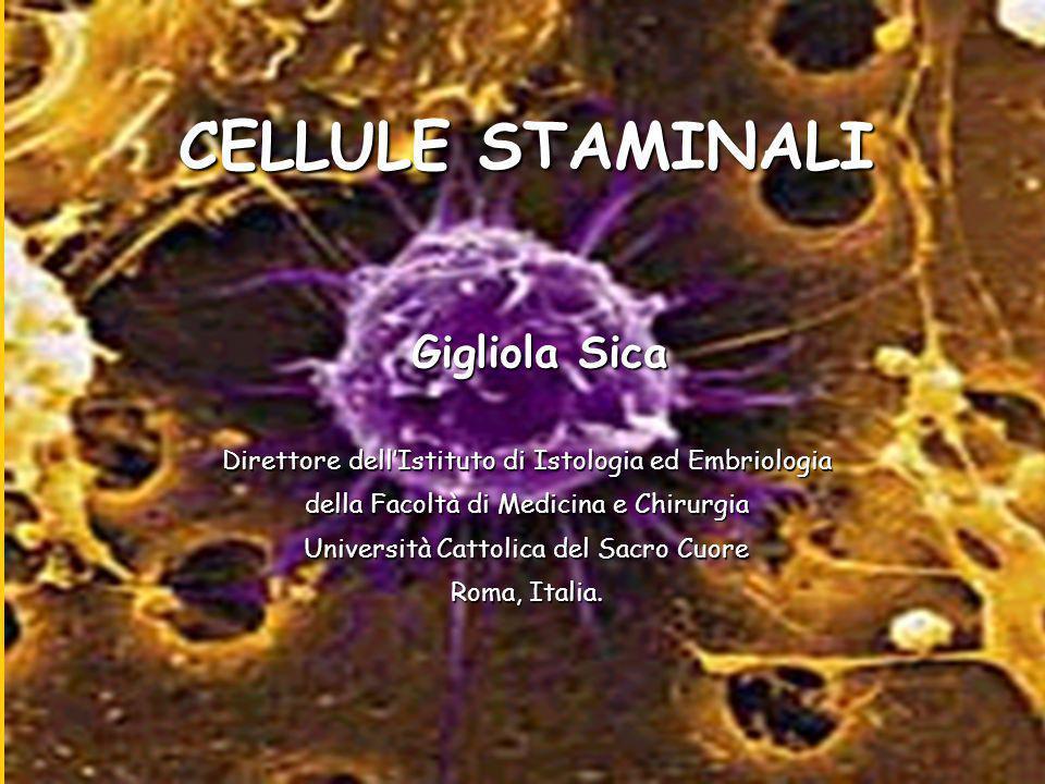 CELLULE STAMINALI Gigliola Sica Direttore dellIstituto di Istologia ed Embriologia della Facoltà di Medicina e Chirurgia Università Cattolica del Sacro Cuore Roma, Italia.