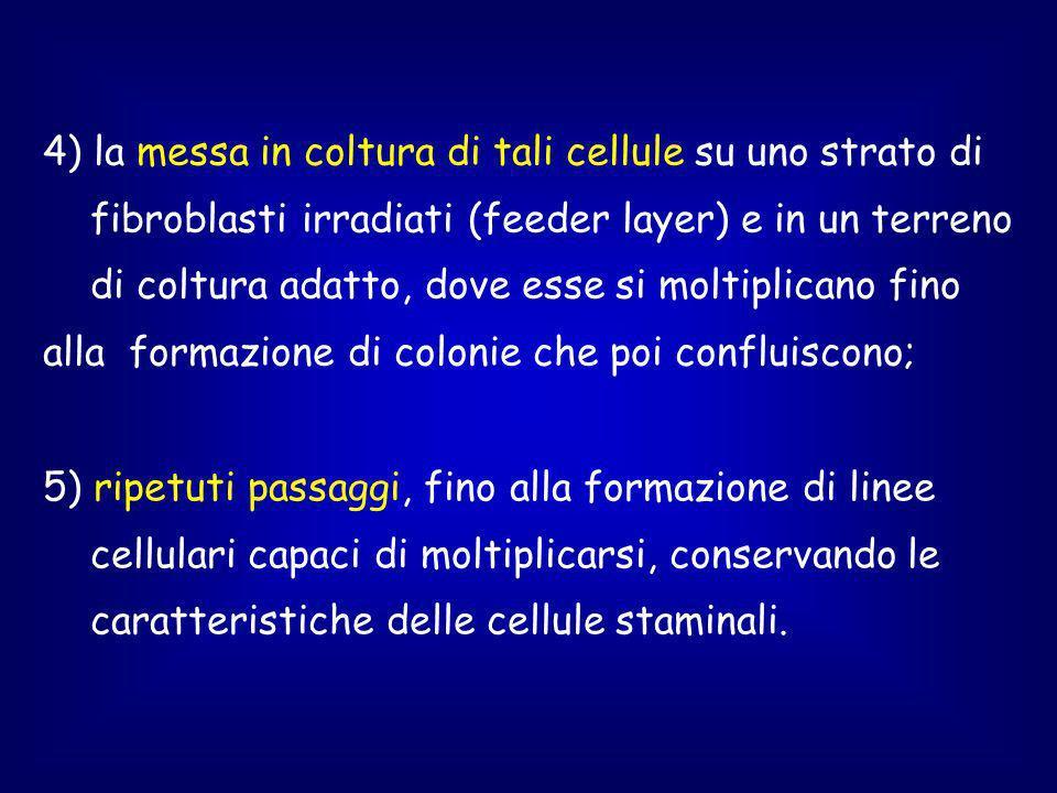 5) ripetuti passaggi, fino alla formazione di linee cellulari capaci di moltiplicarsi, conservando le caratteristiche delle cellule staminali.