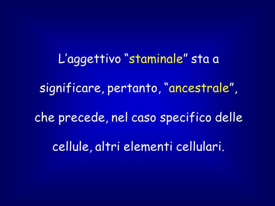 Laggettivo staminale sta a significare, pertanto, ancestrale, che precede, nel caso specifico delle cellule, altri elementi cellulari.