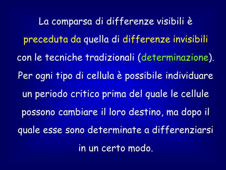 determinazione La comparsa di differenze visibili è preceduta da quella di differenze invisibili con le tecniche tradizionali (determinazione).