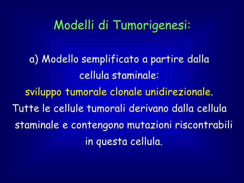 Modelli di Tumorigenesi: a) Modello semplificato a partire dalla cellula staminale: sviluppo tumorale clonale unidirezionale sviluppo tumorale clonale unidirezionale.