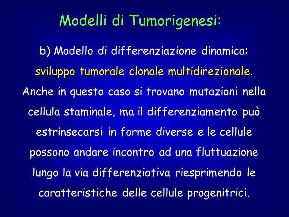 Modelli di Tumorigenesi: b) Modello di differenziazione dinamica: sviluppo tumorale clonale multidirezionale.