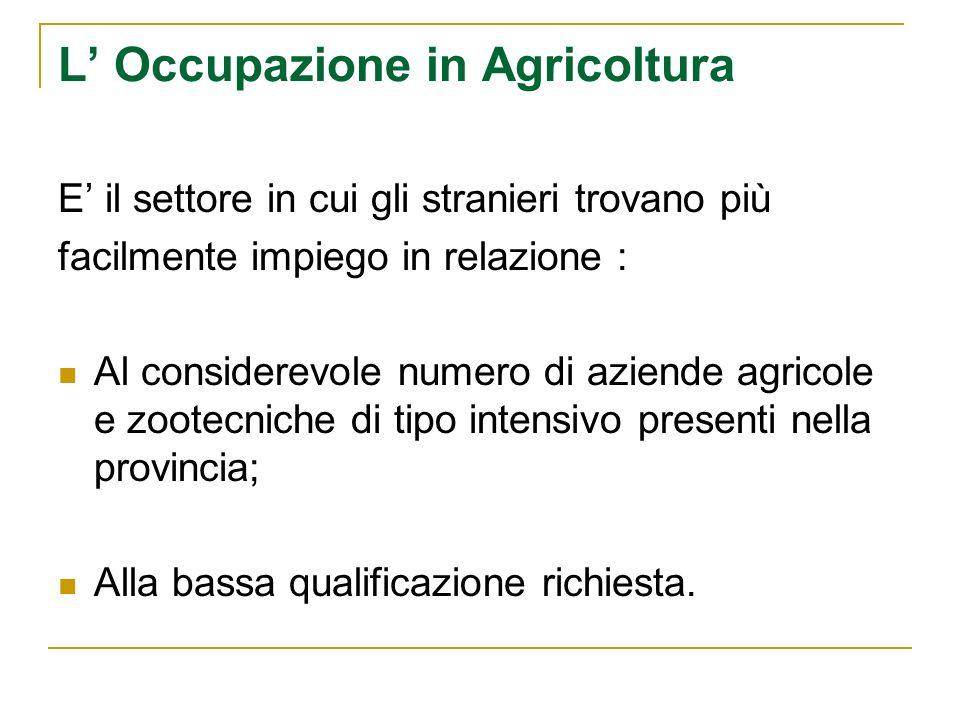L Occupazione in Agricoltura E il settore in cui gli stranieri trovano più facilmente impiego in relazione : Al considerevole numero di aziende agricole e zootecniche di tipo intensivo presenti nella provincia; Alla bassa qualificazione richiesta.