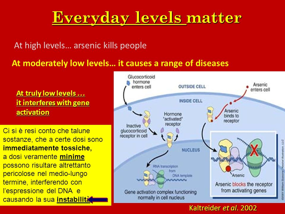 Everyday levels matter At truly low levels … it interferes with gene activation At high levels… arsenic kills people At moderately low levels… it caus