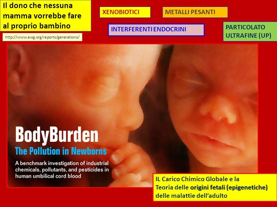 Il dono che nessuna mamma vorrebbe fare al proprio bambino http://www.ewg.org/reports/generations/ PARTICOLATO ULTRAFINE (UP) METALLI PESANTI INTERFERENTI ENDOCRINI origini fetali (epigenetiche) IL Carico Chimico Globale e la Teoria delle origini fetali (epigenetiche) delle malattie delladulto XENOBIOTICI
