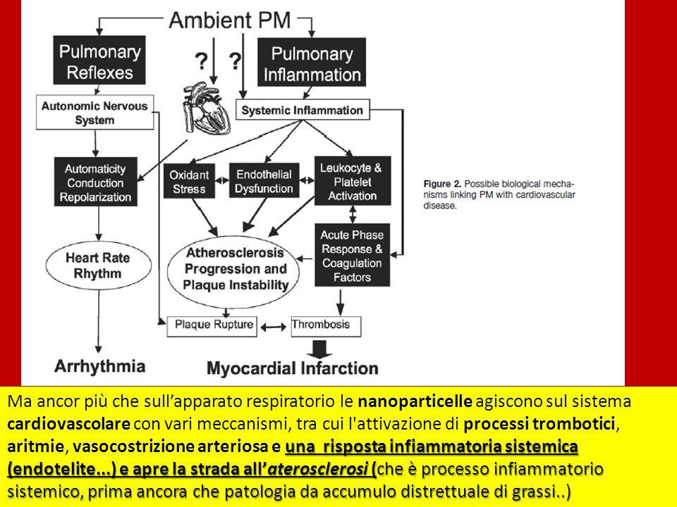 una risposta infiammatoria sistemica (endotelite...) e apre la strada allaterosclerosi (che è processo infiammatorio sistemico, prima ancora che patologia da accumulo distrettuale di grassi..) Ma ancor più che sullapparato respiratorio le nanoparticelle agiscono sul sistema cardiovascolare con vari meccanismi, tra cui l attivazione di processi trombotici, aritmie, vasocostrizione arteriosa e una risposta infiammatoria sistemica (endotelite...) e apre la strada allaterosclerosi (che è processo infiammatorio sistemico, prima ancora che patologia da accumulo distrettuale di grassi..)