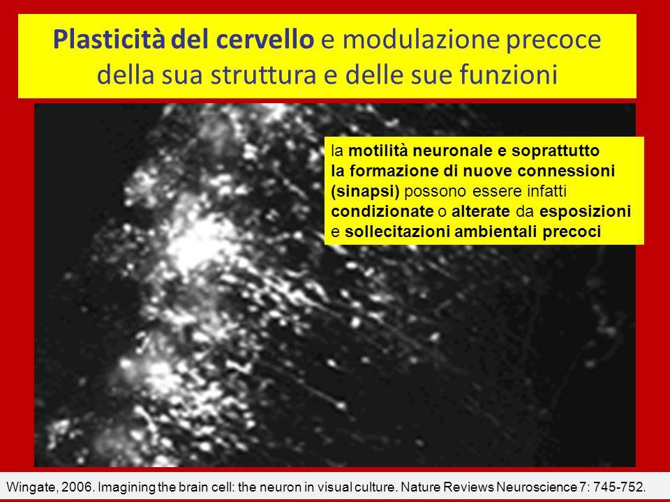 Incidenza di tumori (anno/100.000) Incidenza di tumori (anno/100.000) Poumon80 60 40 20 4 2 1,5 Sein Colon Estomac Lymphôme 10 Leucémie lymphati que Encéphale Lymphômes Neuroblastoma-Retinoblastoma 1 <1 Tessuti molli, rene (Wilms), gonadi 5 Rein Cerveau In genere si afferma che i tumori infantili sono una patologia rara.