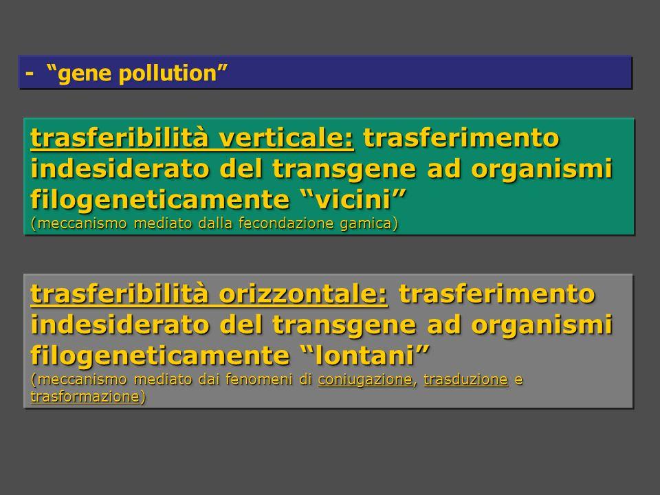 trasferibilità verticale: trasferimento indesiderato del transgene ad organismi filogeneticamente vicini (meccanismo mediato dalla fecondazione gamica) trasferibilità verticale: trasferimento indesiderato del transgene ad organismi filogeneticamente vicini (meccanismo mediato dalla fecondazione gamica) trasferibilità orizzontale: trasferimento indesiderato del transgene ad organismi filogeneticamente lontani (meccanismo mediato dai fenomeni di coniugazione, trasduzione e trasformazione) trasferibilità orizzontale: trasferimento indesiderato del transgene ad organismi filogeneticamente lontani (meccanismo mediato dai fenomeni di coniugazione, trasduzione e trasformazione) - gene pollution