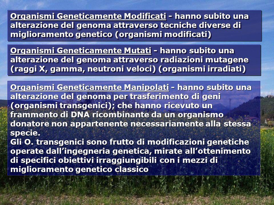 Organismi Geneticamente Modificati - hanno subito una alterazione del genoma attraverso tecniche diverse di miglioramento genetico (organismi modificati) Organismi Geneticamente Mutati - hanno subito una alterazione del genoma attraverso radiazioni mutagene (raggi X, gamma, neutroni veloci) (organismi irradiati) Organismi Geneticamente Manipolati - hanno subito una alterazione del genoma per trasferimento di geni (organismi transgenici); che hanno ricevuto un frammento di DNA ricombinante da un organismo donatore non appartenente necessariamente alla stessa specie.