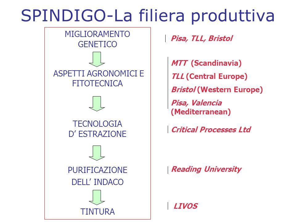 SPINDIGO-La filiera produttiva MIGLIORAMENTO GENETICO ASPETTI AGRONOMICI E FITOTECNICA TECNOLOGIA D ESTRAZIONE PURIFICAZIONE DELL INDACO TINTURA MTT (