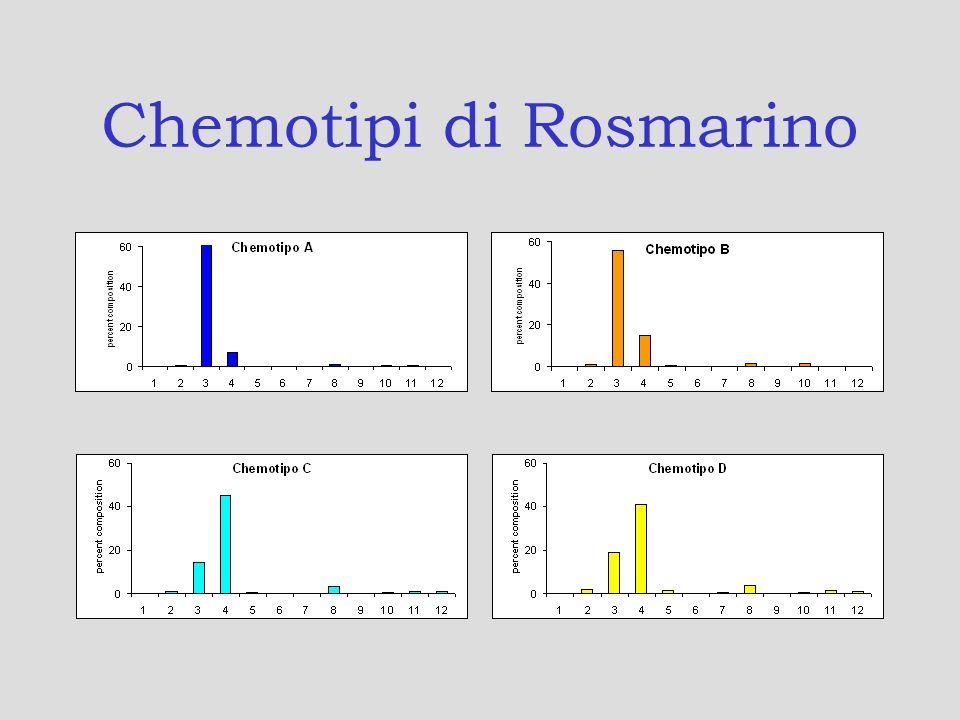 Chemotipi di Rosmarino
