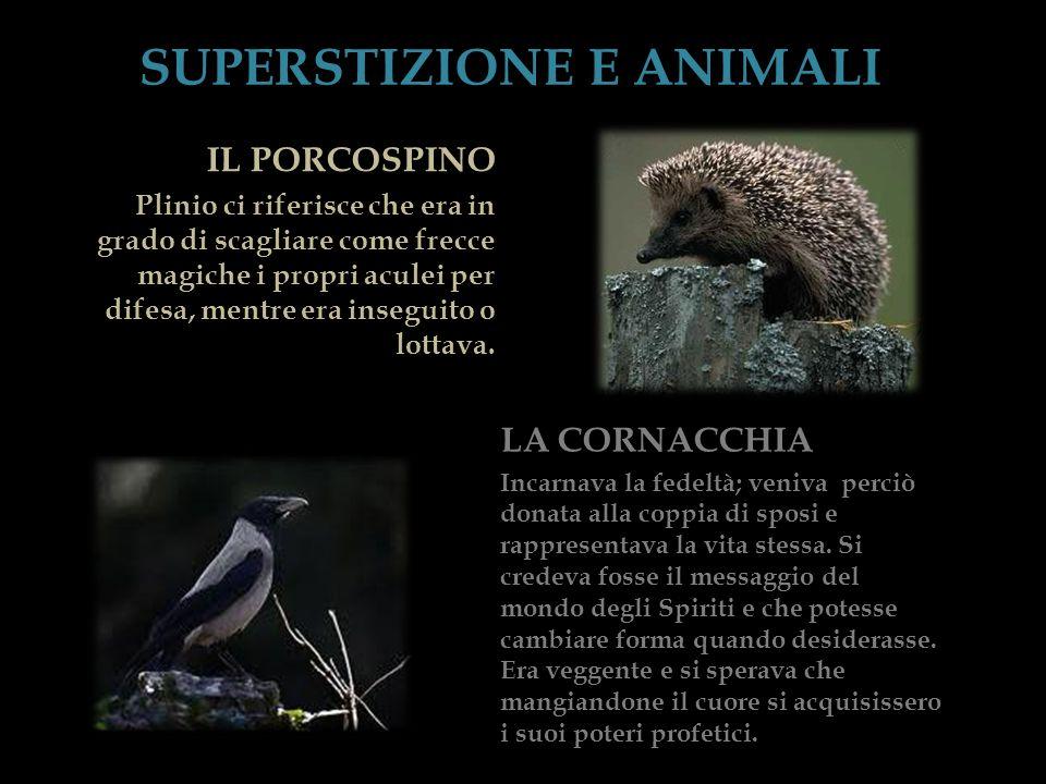SUPERSTIZIONE E ANIMALI LA CORNACCHIA Incarnava la fedeltà; veniva perciò donata alla coppia di sposi e rappresentava la vita stessa. Si credeva fosse