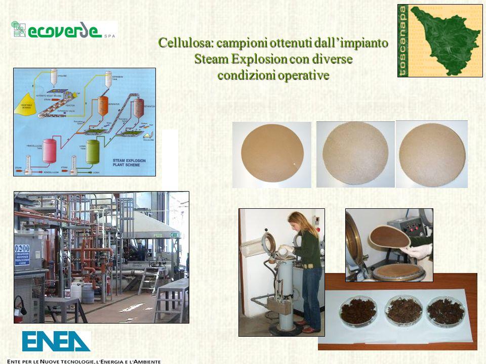 Cellulosa: campioni ottenuti dallimpianto Steam Explosion con diverse condizioni operative