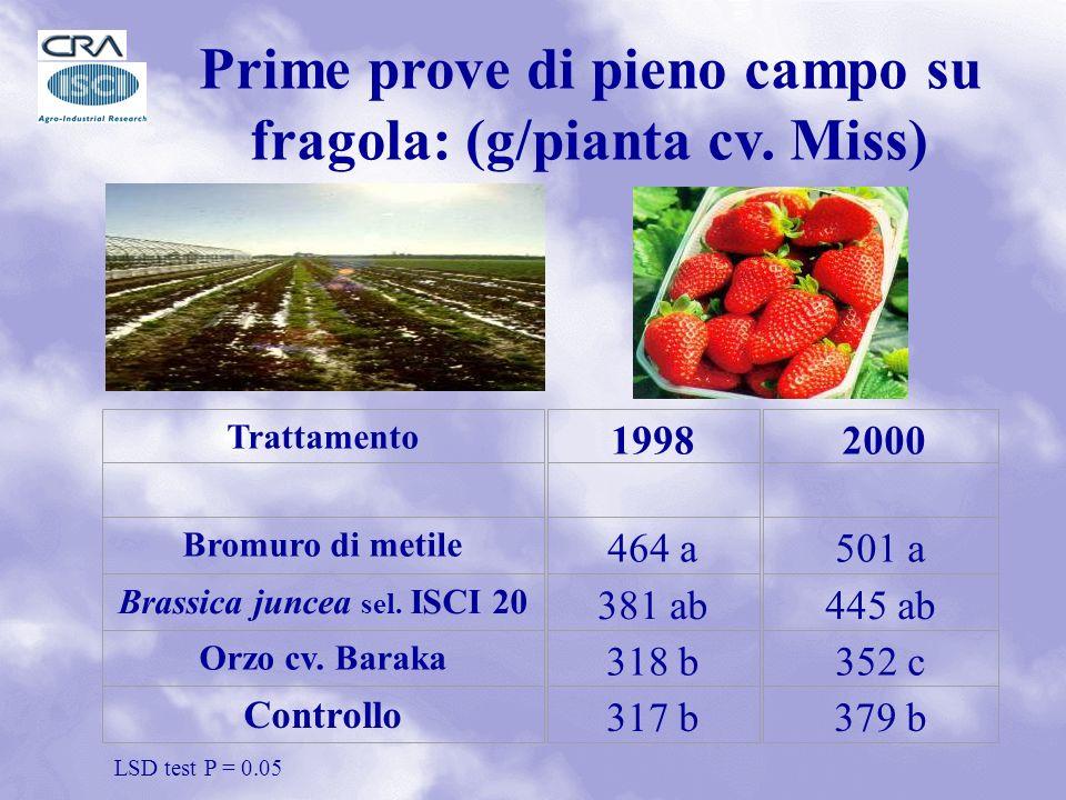 Prime prove di pieno campo su fragola: (g/pianta cv.