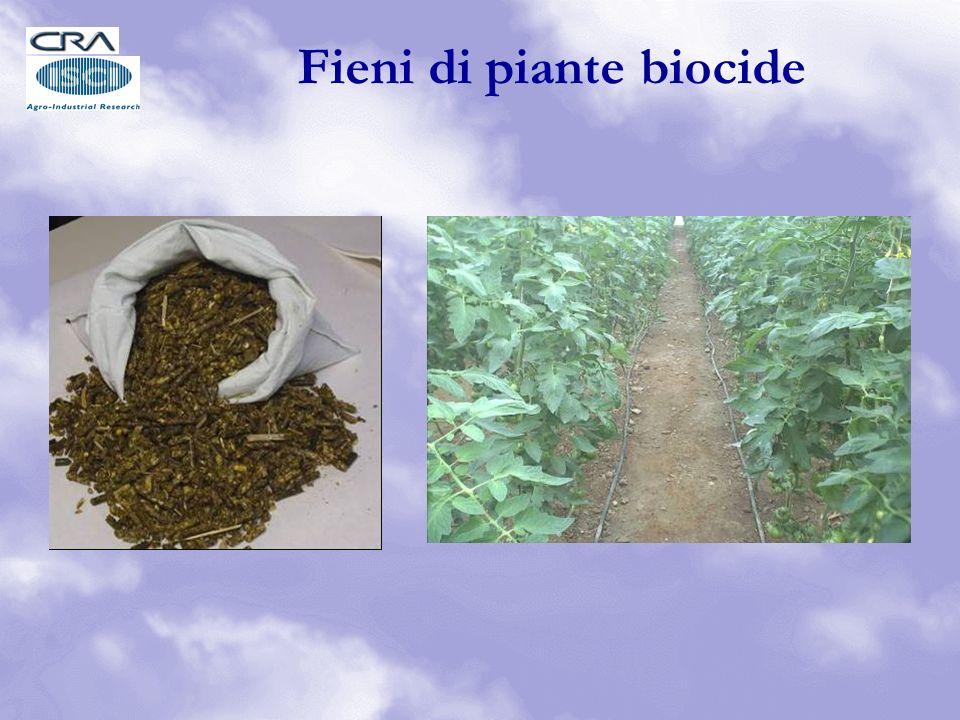 Fieni di piante biocide
