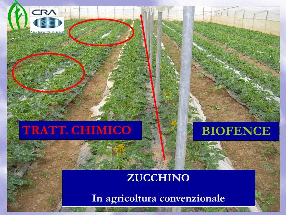 TRATT. CHIMICO BIOFENCE ZUCCHINO In agricoltura convenzionale