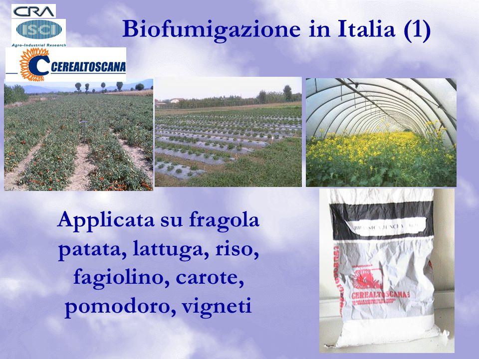 Applicata su fragola patata, lattuga, riso, fagiolino, carote, pomodoro, vigneti Biofumigazione in Italia (1)
