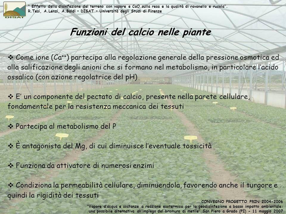Funzioni del calcio nelle piante Come ione (Ca ++ ) partecipa alla regolazione generale della pressione osmotica ed alla salificazione degli anioni ch
