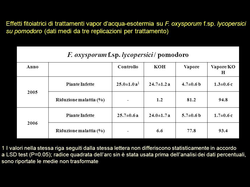 Effetti fitoiatrici di trattamenti vapor dacqua-esotermia su F. oxysporum f.sp. lycopersici su pomodoro (dati medi da tre replicazioni per trattamento