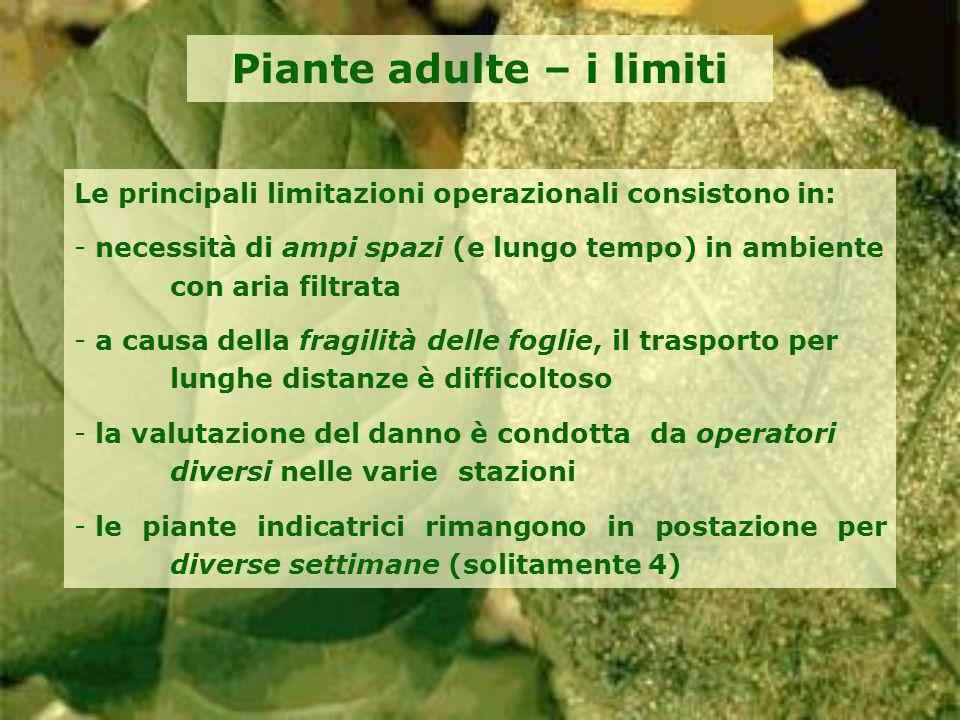 Piante adulte – i limiti Le principali limitazioni operazionali consistono in: - necessità di ampi spazi (e lungo tempo) in ambiente con aria filtrata
