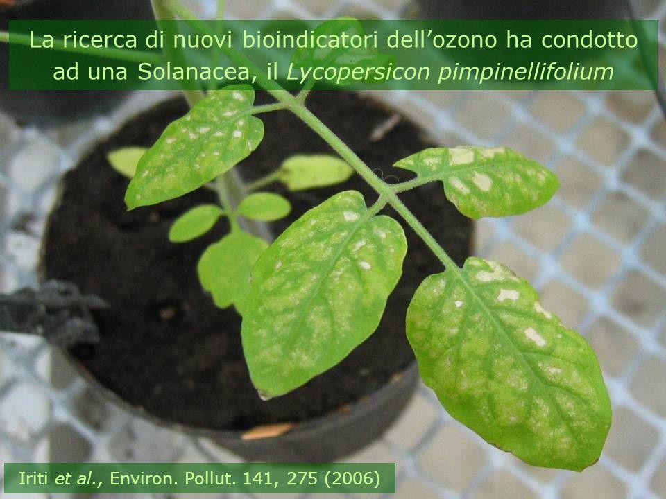La ricerca di nuovi bioindicatori dellozono ha condotto ad una Solanacea, il Lycopersicon pimpinellifolium Iriti et al., Environ. Pollut. 141, 275 (20