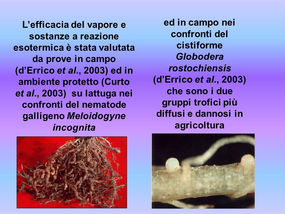 Lefficacia del vapore e sostanze a reazione esotermica è stata valutata da prove in campo (dErrico et al., 2003) ed in ambiente protetto (Curto et al.
