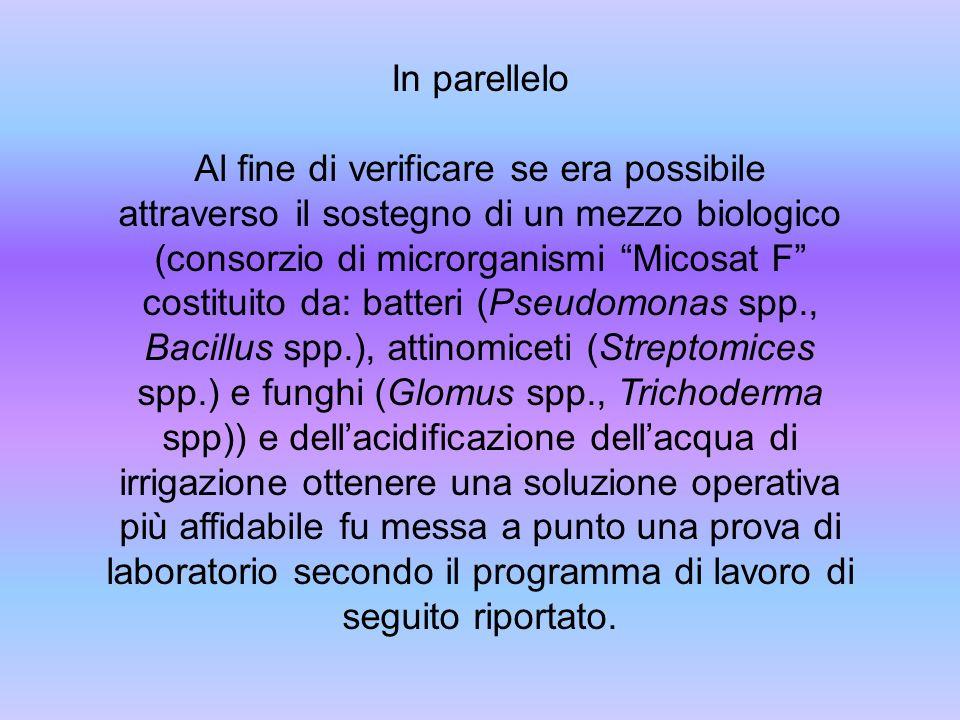In parellelo Al fine di verificare se era possibile attraverso il sostegno di un mezzo biologico (consorzio di microrganismi Micosat F costituito da: