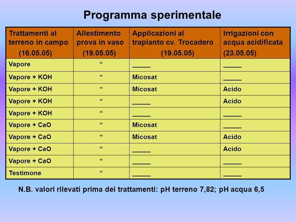 Programma sperimentale Trattamenti al terreno in campo (16.05.05) Allestimento prova in vaso (19.05.05) Applicazioni al trapianto cv. Trocadero (19.05