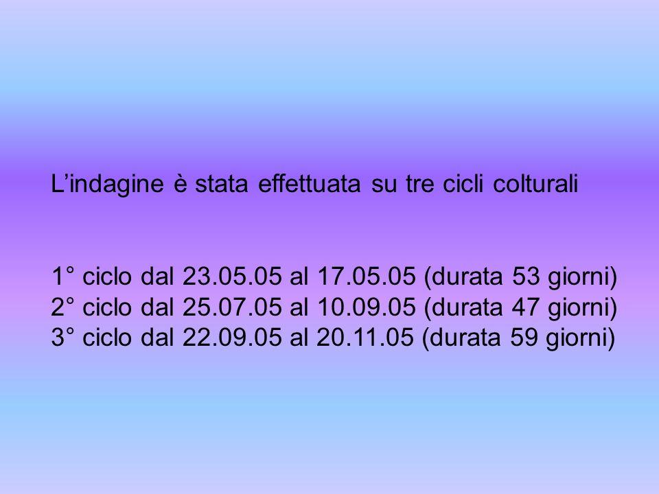 Lindagine è stata effettuata su tre cicli colturali 1° ciclo dal 23.05.05 al 17.05.05 (durata 53 giorni) 2° ciclo dal 25.07.05 al 10.09.05 (durata 47