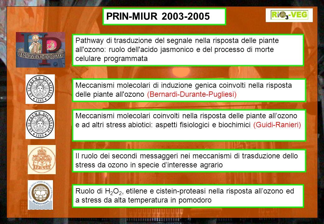 Pathway di trasduzione del segnale nella risposta delle piante all'ozono: ruolo dell'acido jasmonico e del processo di morte celulare programmata Mecc