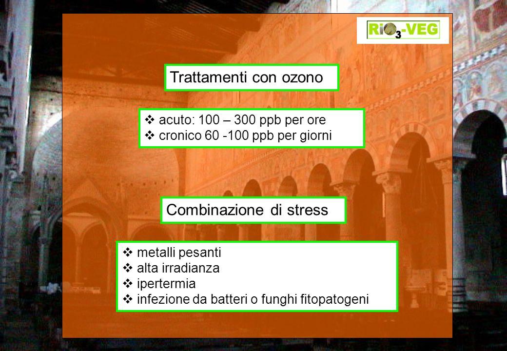Trattamenti con ozono acuto: 100 – 300 ppb per ore cronico 60 -100 ppb per giorni Combinazione di stress metalli pesanti alta irradianza ipertermia in