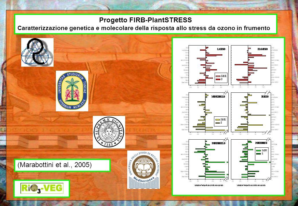 Progetto FIRB-PlantSTRESS Caratterizzazione genetica e molecolare della risposta allo stress da ozono in frumento (Marabottini et al., 2005)