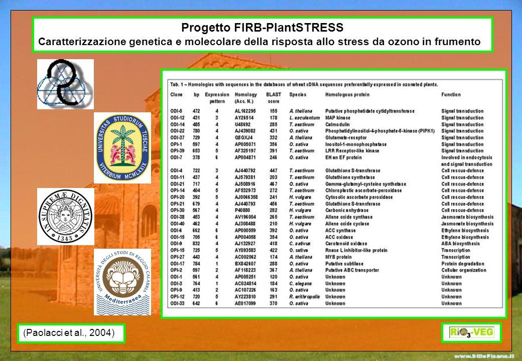 Progetto FIRB-PlantSTRESS Caratterizzazione genetica e molecolare della risposta allo stress da ozono in frumento Tab. 1 – Homologies with sequences i