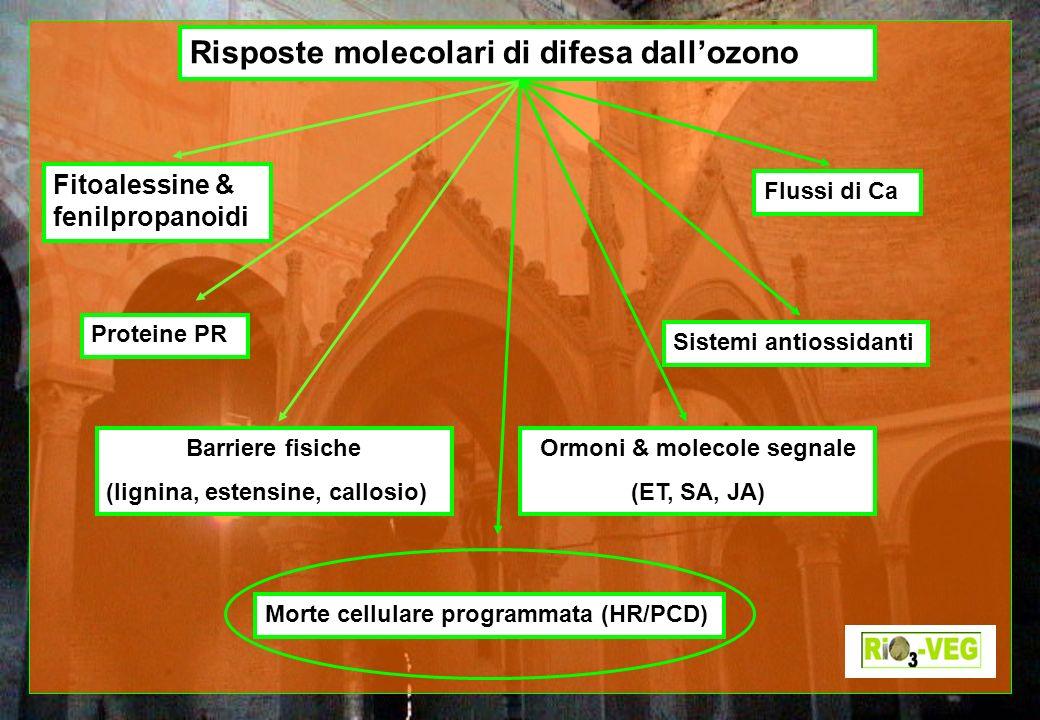 Risposte molecolari di difesa dallozono Fitoalessine & fenilpropanoidi Barriere fisiche (lignina, estensine, callosio) Proteine PR Ormoni & molecole s