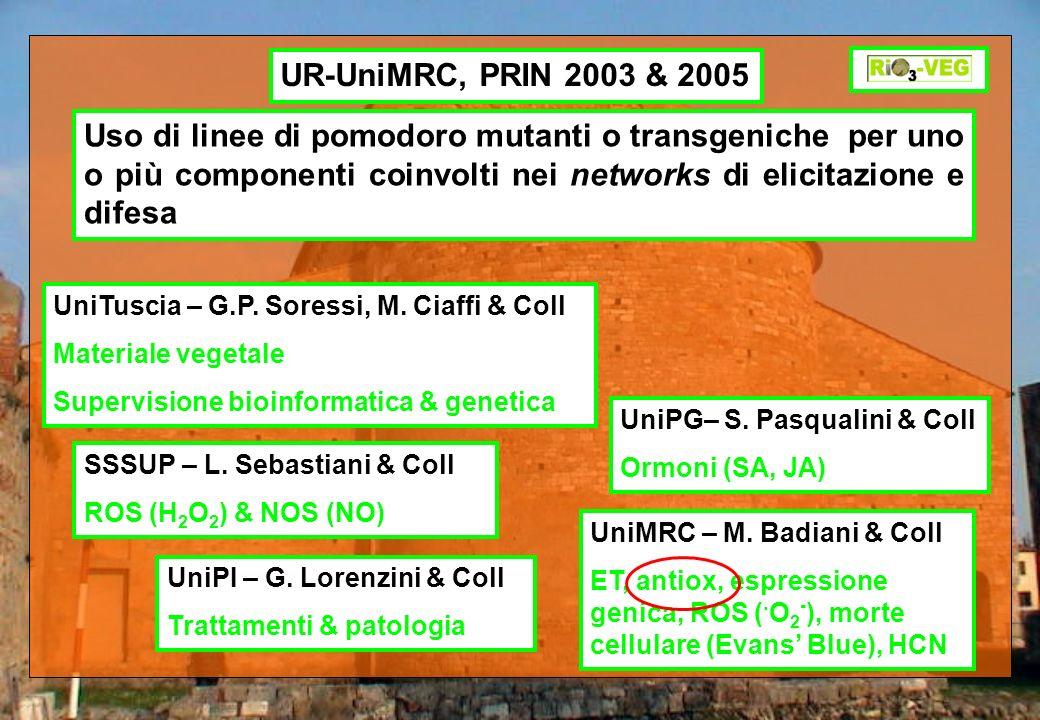 UR-UniMRC, PRIN 2003 & 2005 Uso di linee di pomodoro mutanti o transgeniche per uno o più componenti coinvolti nei networks di elicitazione e difesa U