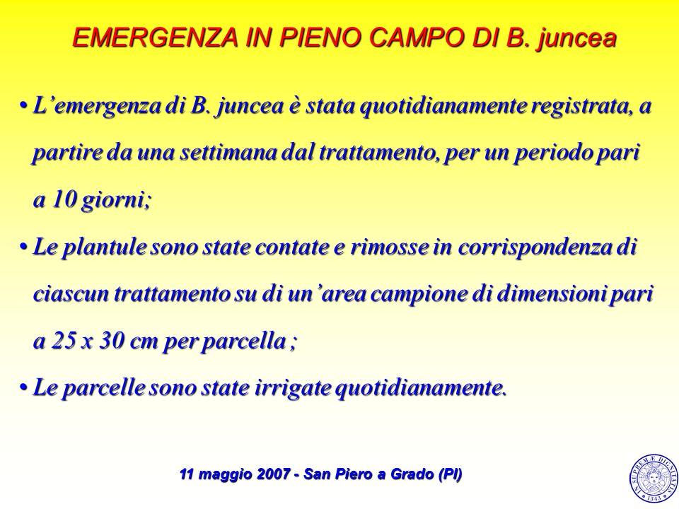 EMERGENZA IN PIENO CAMPO DI B. juncea Lemergenza di B. juncea è stata quotidianamente registrata, a partire da una settimana dal trattamento, per un p