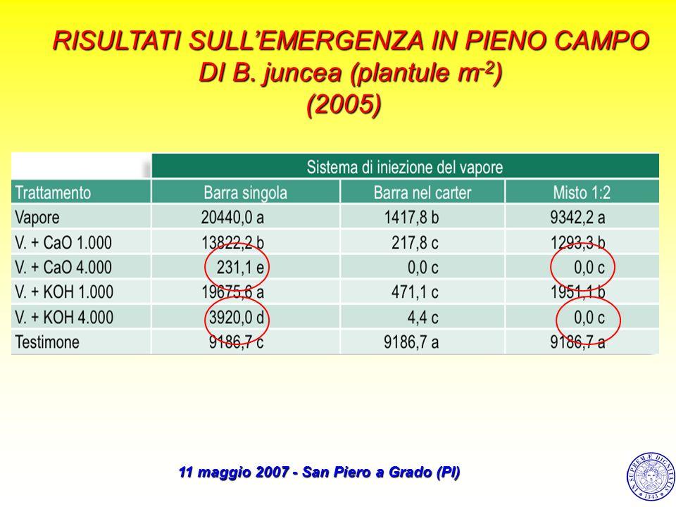 RISULTATI SULLEMERGENZA IN PIENO CAMPO DI B. juncea (plantule m -2 ) (2005) 11 maggio 2007 - San Piero a Grado (PI)