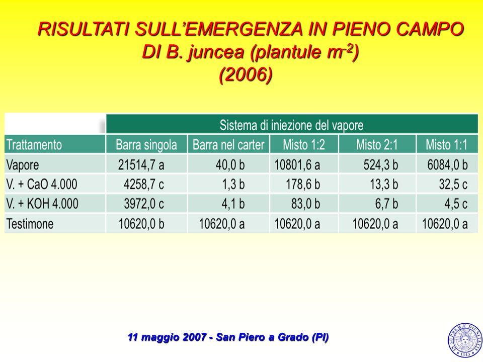 RISULTATI SULLEMERGENZA IN PIENO CAMPO DIB. juncea (plantule m -2 ) DI B. juncea (plantule m -2 )(2006)