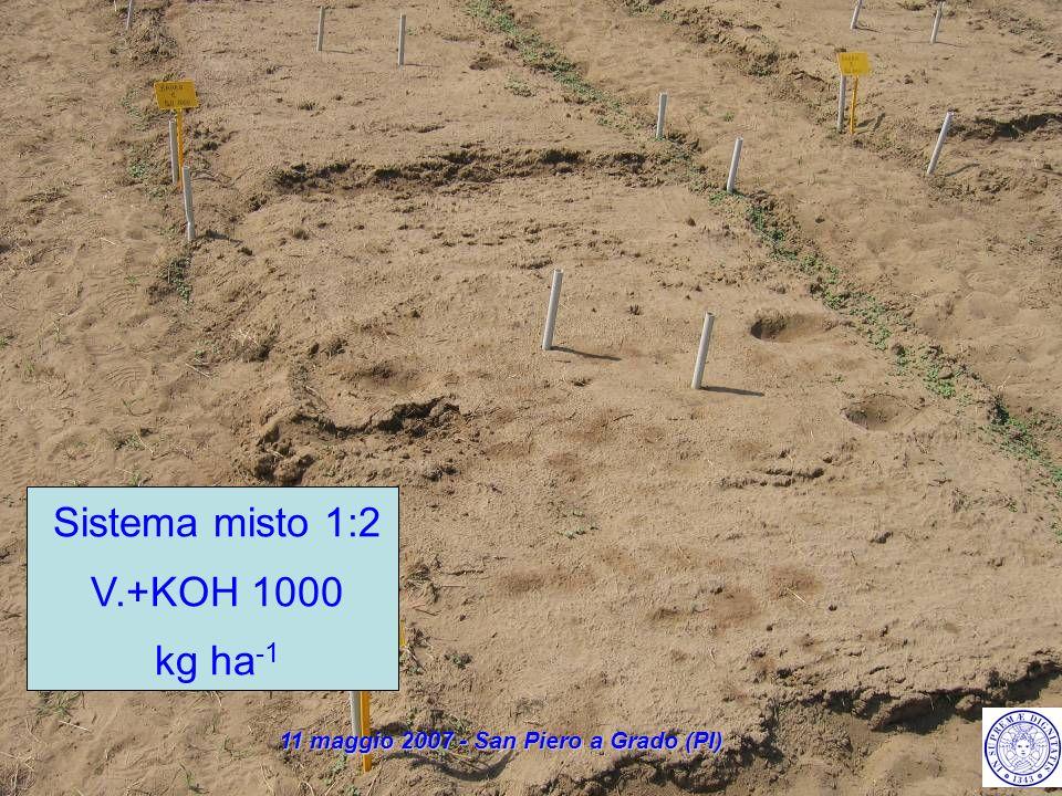 Sistema misto 1:2 V.+KOH 1000 kg ha -1 11 maggio 2007 - San Piero a Grado (PI)