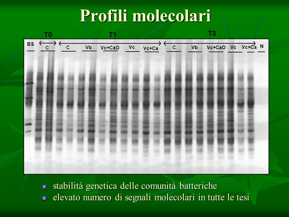 Profili molecolari CVb Vc Vc+CaO N T3 Vc+Ca T1 C Vb Vc+CaO Vc Vc+Ca T0 C BS stabilità genetica delle comunità batteriche stabilità genetica delle comunità batteriche elevato numero di segnali molecolari in tutte le tesi elevato numero di segnali molecolari in tutte le tesi