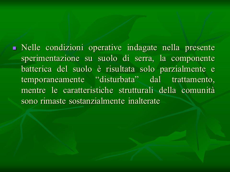 Nelle condizioni operative indagate nella presente sperimentazione su suolo di serra, la componente batterica del suolo è risultata solo parzialmente