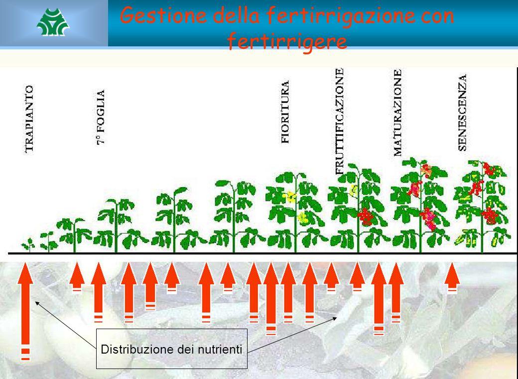 Gestione della fertirrigazione con fertirrigere Distribuzione dei nutrienti