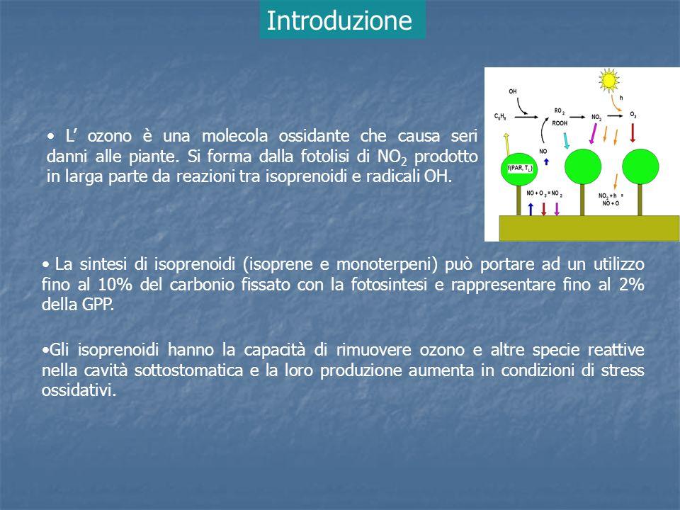 Il metodo più sicuro per accertare il rischio da ozono per le piante (approccio di livello 2 – UNECE) è quello basato sul flusso stomatico di ozono e di conseguenza luptake stomatico delle foglie Diventa quindi essenziale conoscere leffettiva quantità di ozono catturata dalle foglie (uptake) e verificare se significative quantità di ozono vengono accumulate negli spazi intercellulari (O 3ci ) O 3 out O 3 uptake O 3ci Isoprenoidi Gli alberi hanno la capacità di rimuovere ozono attraverso processi stomatici (adsorbimento) e non (absorbimento) Introduzione