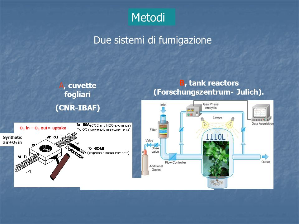 Due sistemi di fumigazione 1110L Synthetic air+O 3 in O 3 in – O 3 out= uptake A, cuvette fogliari (CNR-IBAF) B, tank reactors (Forschungszentrum- Jul