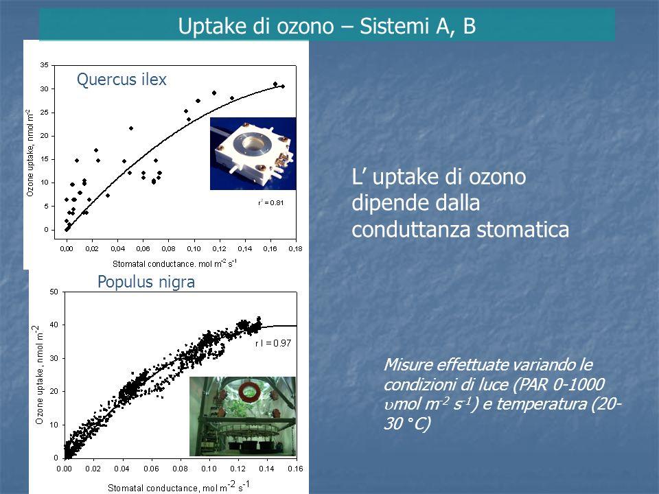 Uptake di ozono – Sistema B Quercus ilex