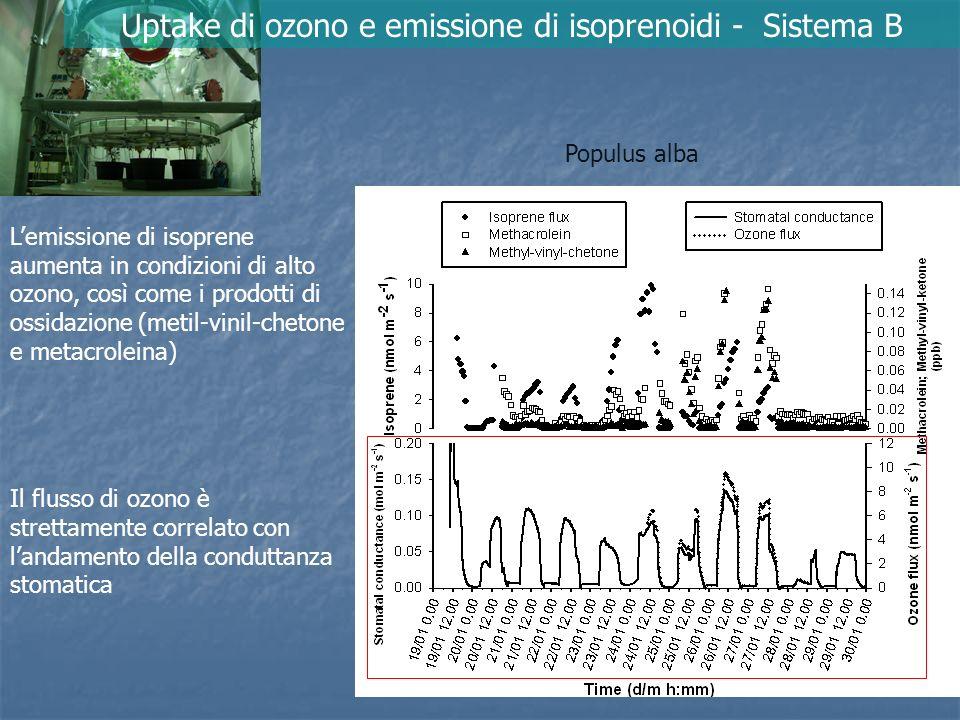 I monoterpeni hanno un ruolo attivo nel rimuovere ozono No CO 2 > gs Ma Emissione di monoterpeni – 80% O 3 uptake – 20% Uptake di ozono e emissione di isoprenoidi - Sistema B Quercus ilex Uptake Conduttanza stomatica