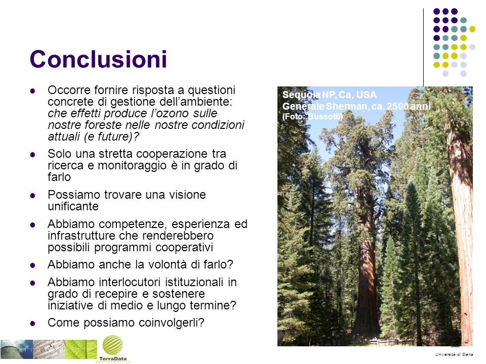 Università di Siena Conclusioni Occorre fornire risposta a questioni concrete di gestione dellambiente: che effetti produce lozono sulle nostre foreste nelle nostre condizioni attuali (e future).